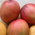 beneficios-de-comer-mangos_m2d0t