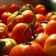 bondades-del-tomate-para-la-belleza_zat3y