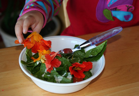 Comer flores