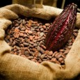 conoce-los-beneficios-del-cacao-para-tu-salud_skaum
