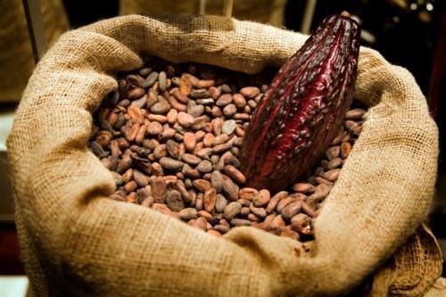 Conoce los beneficios del cacao para tu salud