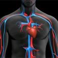 mejora-la-circulacion-de-la-sangre-de-forma-natural_oqiy0
